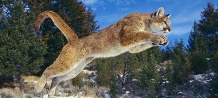 Ils se font voler leurs consoles de jeux par des cougars