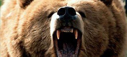 Un simulateur... d'ours !