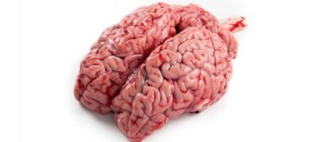 Le jeu vidéo responsable de désordres neurologiques de type Alzheimer ?