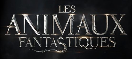 Les Animaux Fantastiques : un film de Harry Potter sans Harry Potter