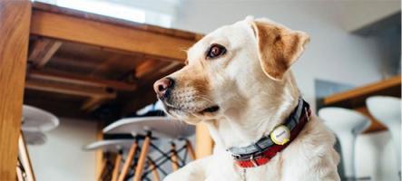 iPuppyGo : un traqueur de chien, de chat... et d'enfants