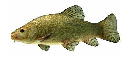 1er avril : les news qui sentaient le poisson...