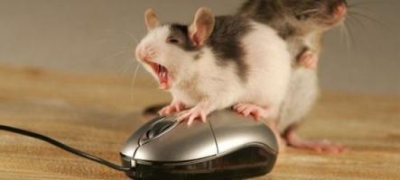 Sondage : Quelle est la marque de votre souris ?